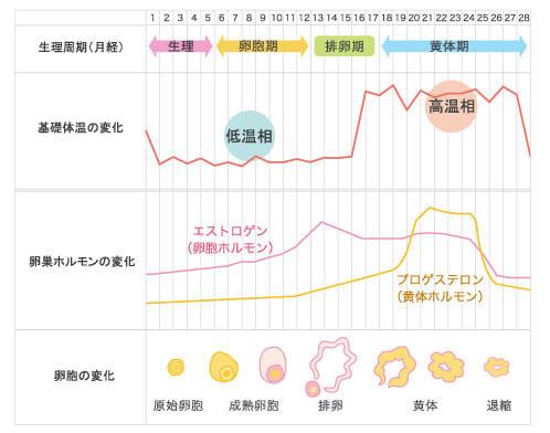 生理の体温とホルモンの変化